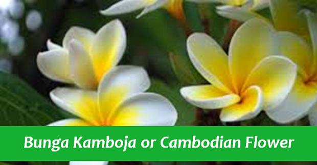 Bunga Kamboja or Cambodian Flower
