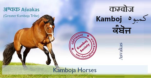 Kamboj Horses