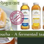Kombucha – A fermented tea drink