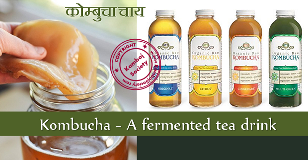 how to make fermented tea drink